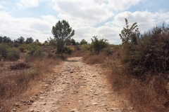 Auf dem Israel National Trail.